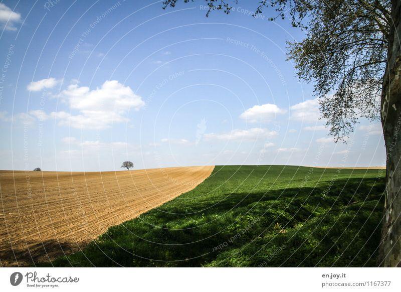 jwd Ferien & Urlaub & Reisen Ferne Sommer Sommerurlaub Landwirtschaft Forstwirtschaft Umwelt Natur Landschaft Pflanze Himmel Wolken Horizont Sonnenlicht