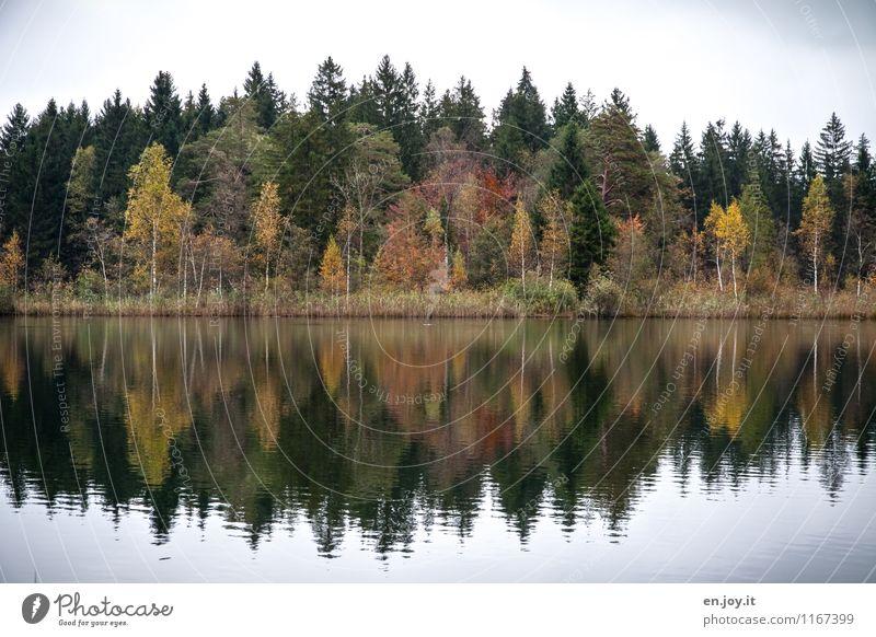 symmetrisch Himmel Natur Ferien & Urlaub & Reisen Pflanze grün Landschaft ruhig Wald Umwelt gelb Traurigkeit Herbst See Idylle Klima Vergänglichkeit