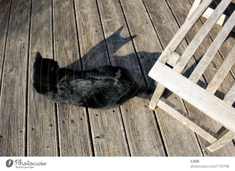 pelz auf holz Katze Sonne Sommer Tier Einsamkeit schwarz ruhig Holz grau springen braun Zufriedenheit glänzend Spitze Ohr Fell