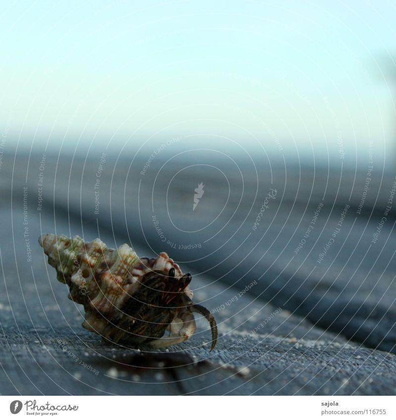 einsiedlerkrebs Meeresfrüchte Haus Tier Schnecke Muschel 1 Holz Schutz Krebstier Einsiedlerkrebs Beine Schneckenhaus Spirale Asien Strand dunkel Zufriedenheit