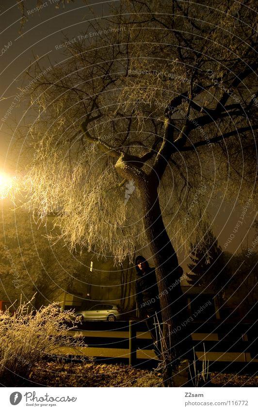 nachtgestallt III Nacht dunkel Baum Licht Belichtung Langzeitbelichtung stehen schwarz durchsichtig Sträucher Straßenbeleuchtung Laterne gelb gefroren Winter