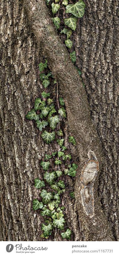 rooting Natur Pflanze Baum Efeu Zeichen entdecken hängen krabbeln Wachstum Partnerschaft Design planen Ranke Baumrinde Wurzel Kletterpflanzen