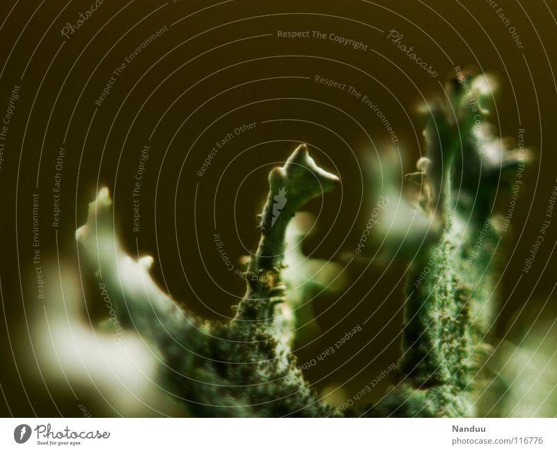 Sie sind hier! fremdartig skurril seltsam Makroaufnahme winken Begrüßung Hallo Lebewesen Symbiose Einsamkeit sensibel Umwelt klein winzig Mikrofotografie knotig