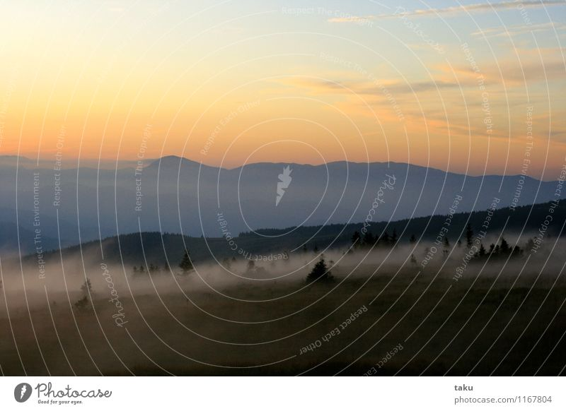 FOG Natur Landschaft Pflanze Urelemente Himmel Wolken Sonnenaufgang Sonnenuntergang Sommer Nebel Wald Hügel Gipfel Unendlichkeit Abenteuer Zufriedenheit
