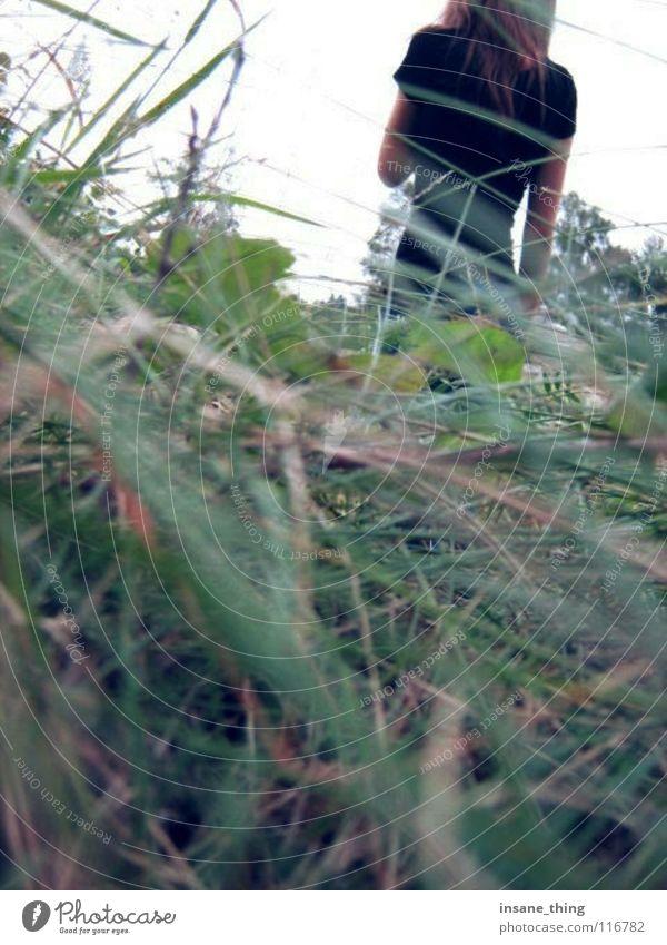 haunted. Gras schwarz verloren Einsamkeit Feld Wiese Angst Panik