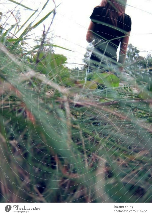 haunted. schwarz Einsamkeit Wiese Gras Feld Angst verloren Panik