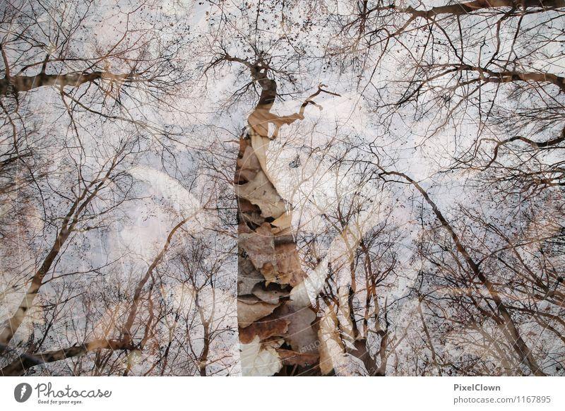 Hoch hinaus Natur Ferien & Urlaub & Reisen Pflanze schön Baum Landschaft Blatt Tier Wald Gefühle Herbst Stil Holz Garten braun Stimmung