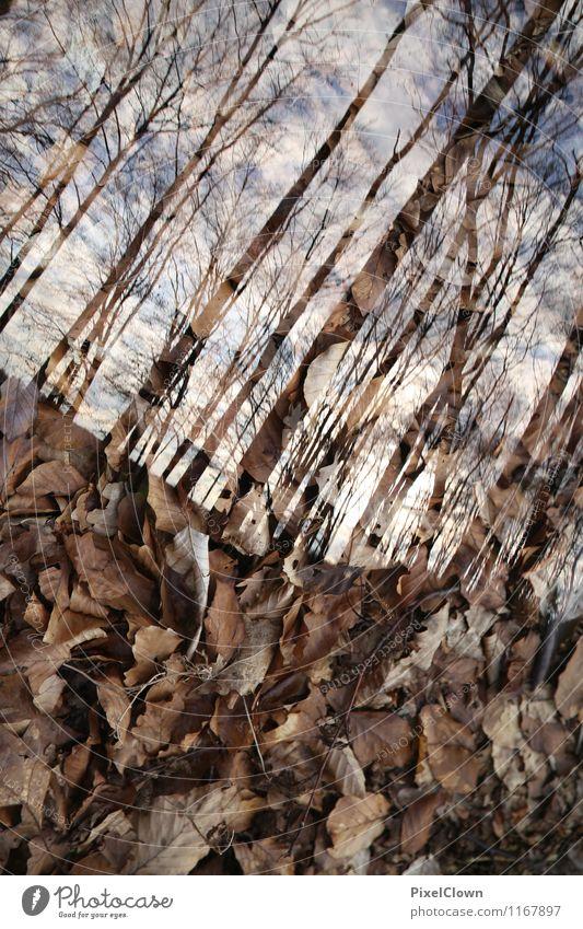 Schräglage im Wald Lifestyle elegant Stil Design schön Landwirtschaft Forstwirtschaft Umwelt Natur Landschaft Tier Pflanze Baum Blatt Wildpflanze Park Feld Holz