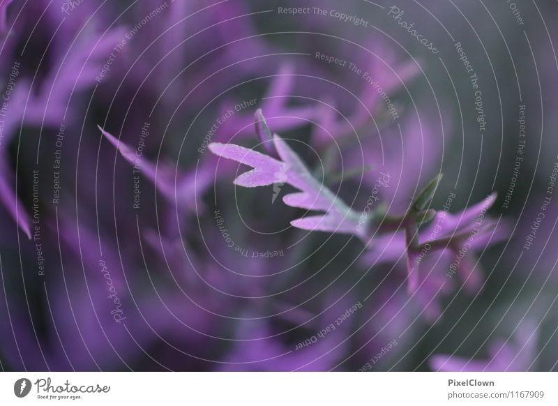 Lila Farbpracht Natur Ferien & Urlaub & Reisen Pflanze schön Blume Landschaft Gefühle Stil Garten Stimmung Park Feld Wachstum elegant Sträucher ästhetisch
