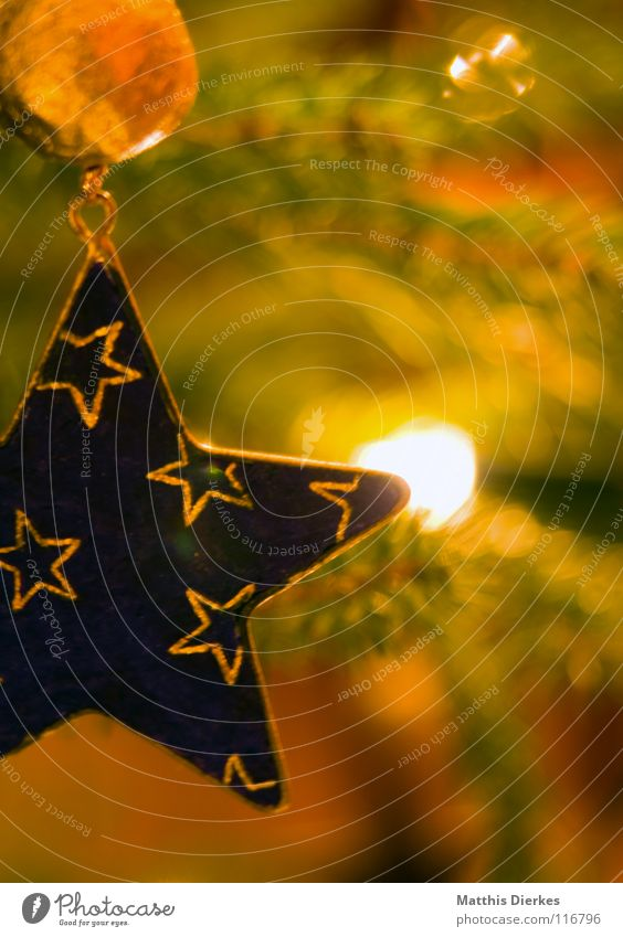 Tannenbaum Weihnachten & Advent schön rot Winter Fenster Spielen Wärme Lampe elegant gold 3 ästhetisch Stern (Symbol) Stoff rund niedlich
