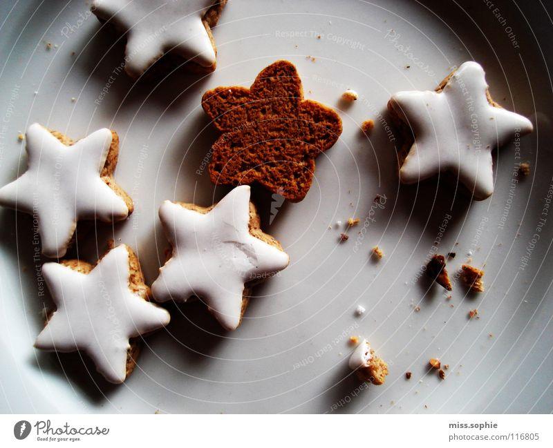 zimtsterne zwei Weihnachten & Advent Stimmung Zufriedenheit Fröhlichkeit genießen süß Stern (Symbol) Warmherzigkeit lecker Wohlgefühl Teller Backwaren gemütlich