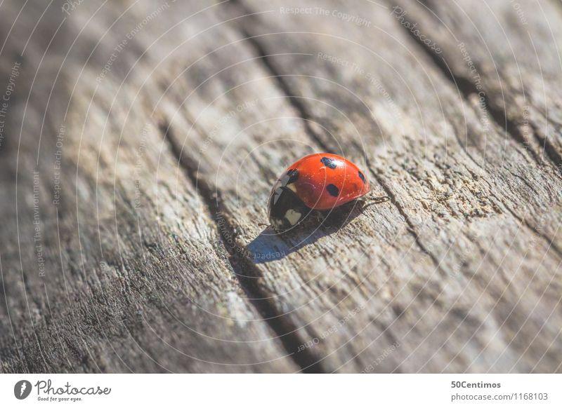 Marienkäfer Tier Wildtier Insekt Käfer 1 Holz gehen krabbeln Einsamkeit entdecken Ferien & Urlaub & Reisen Wachstum Wege & Pfade Farbfoto Gedeckte Farben