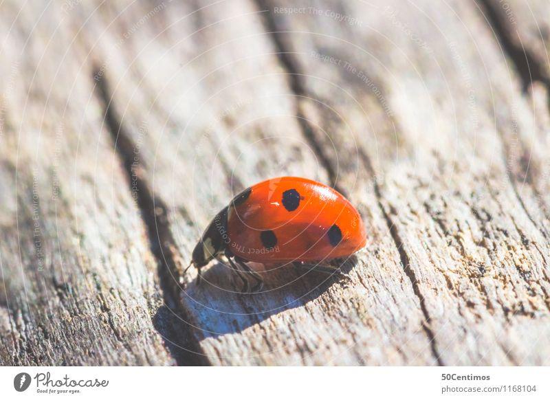 Marienkäfer Tier Glück gehen Wildtier Holztisch Käfer Marienkäfer