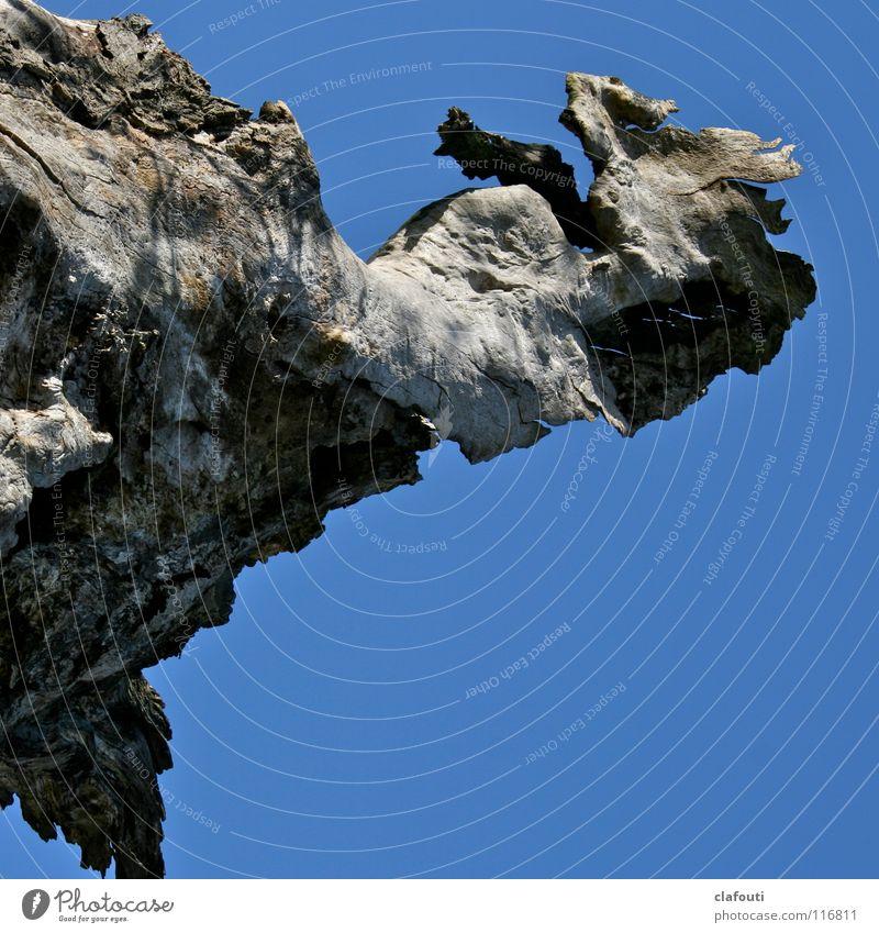 Flieg, Drache! Himmel blau Baumstamm Holz fliegen obskur toter Baum Luftverkehr Fantasiewesen