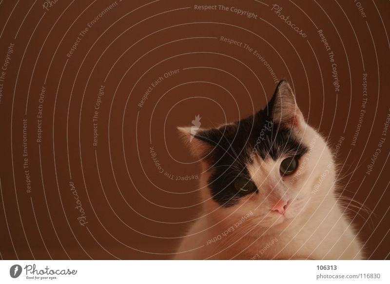 HELLO SWEETHEART Katze Hauskatze Tier weiß scheckig Festessen Küche Fliesen u. Kacheln Schalen & Schüsseln 3 vergangen unsichtbar gehen Ende schwarz