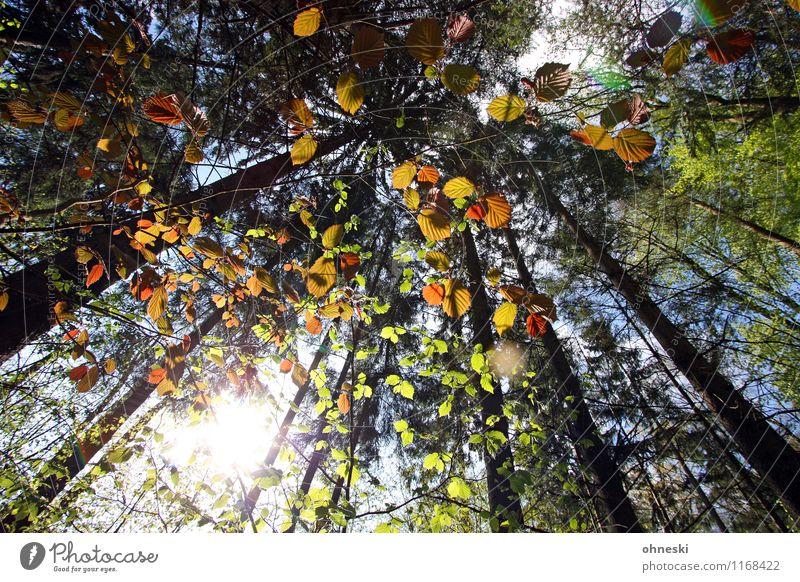 Waldspaziergang Natur Landschaft Sonne Sonnenlicht Frühling Schönes Wetter Pflanze Baum Blatt Baumstamm mehrfarbig grün Lebensfreude Frühlingsgefühle Idylle