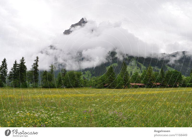 Wattierter Berg Natur Landschaft Wolken Sommer Nebel Gras Alpen Berge u. Gebirge ruhig Erholung Ferien & Urlaub & Reisen Frieden Inspiration Stimmung Umwelt