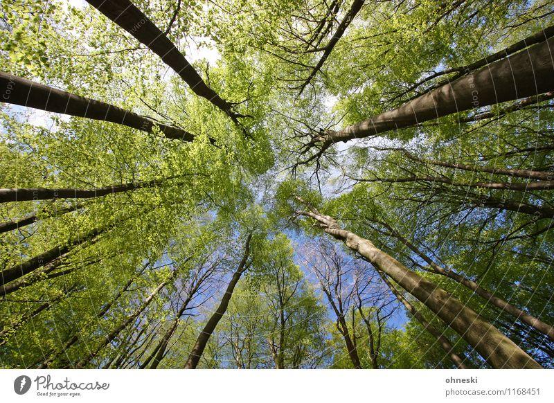 Wald Natur Frühling Schönes Wetter Baum Blatt Frühlingsgefühle Leben Umwelt Umweltschutz Wachstum Farbfoto Außenaufnahme Strukturen & Formen Tag Sonnenlicht