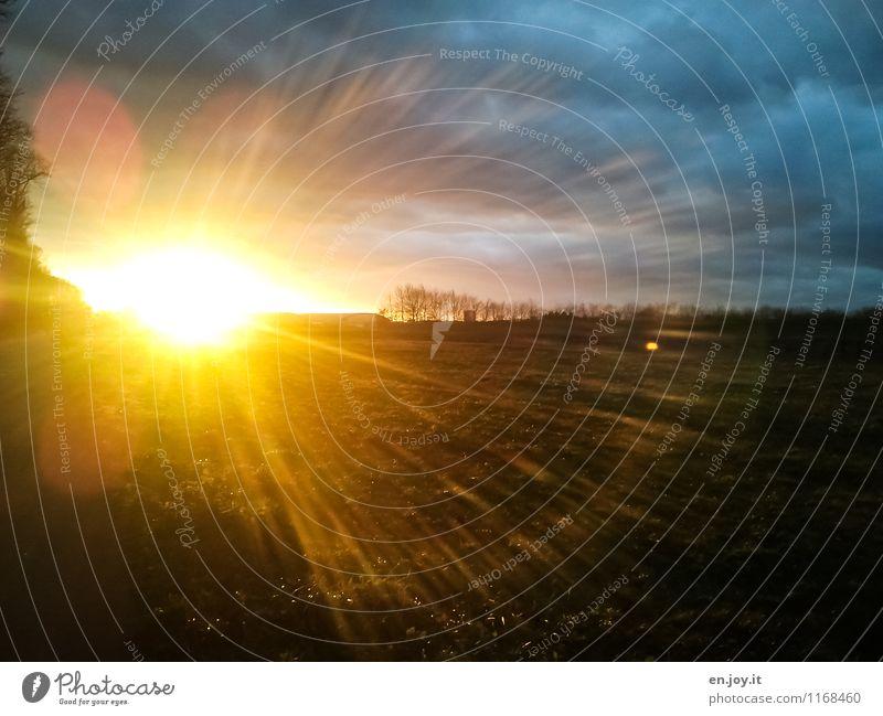 Abschiedsgruß Himmel Natur Ferien & Urlaub & Reisen Sonne Landschaft Ferne Umwelt gelb Traurigkeit Frühling Herbst Wiese Glück Freiheit hell Horizont