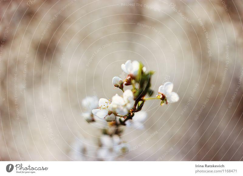 Frühlingsblumen Natur Pflanze Baum Blume Blatt Blüte Garten genießen neu Neugier niedlich schön grün weiß Frühblüher weiße Blumen Farbfoto Außenaufnahme