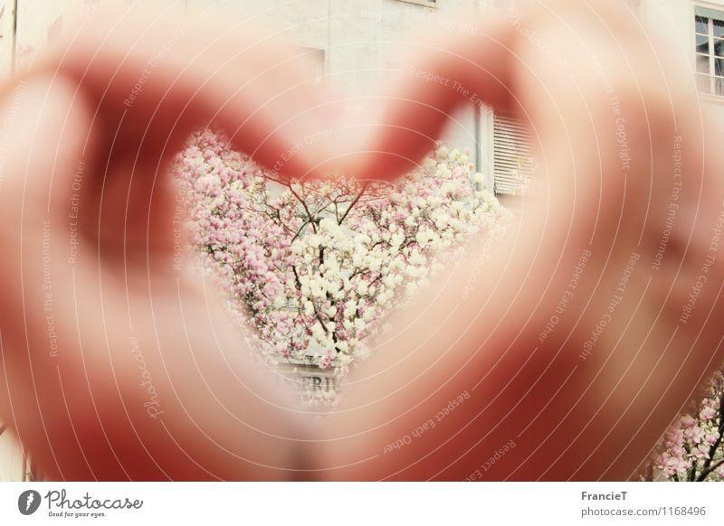 Herz in meiner Hand Ferien & Urlaub & Reisen Ausflug Städtereise Finger Frühling Blüte Magnolienbaum Lyon Frankreich Stadt Fenster Duft Glück Kitsch nah positiv