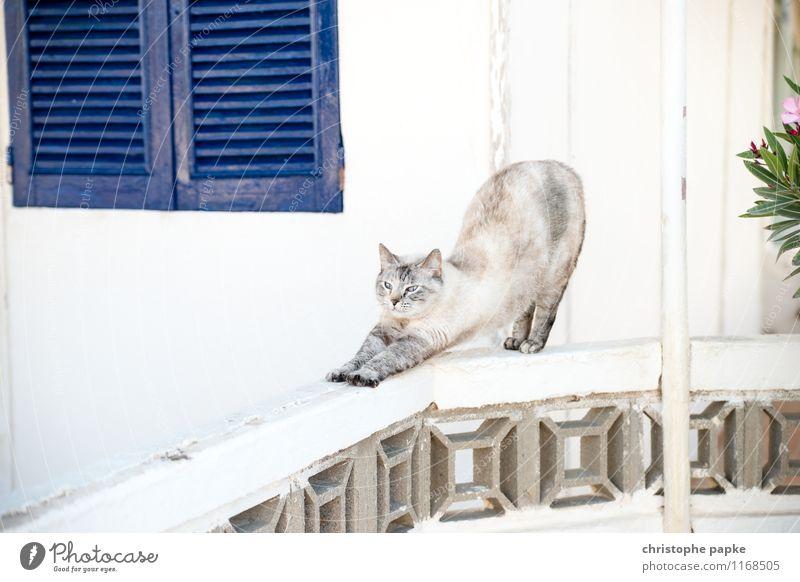 Katze macht den Hund Yoga Tier Haustier 1 Bewegung hell niedlich Sport strecken dehnen aufwachen Farbfoto Außenaufnahme Menschenleer Textfreiraum oben Tag