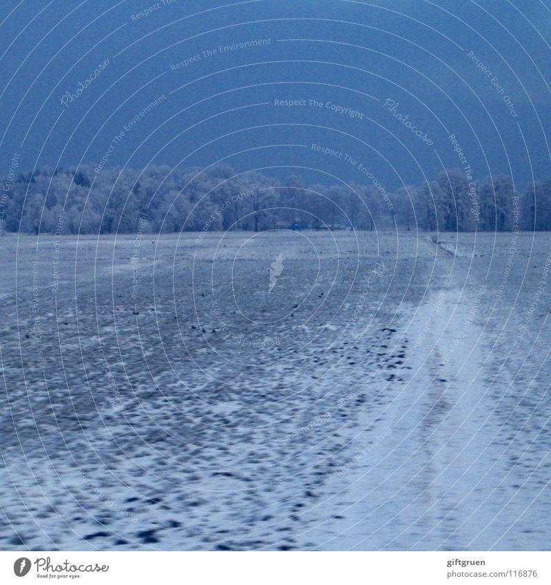 kurz vor innsbruck Himmel Baum Winter Einsamkeit Wald dunkel kalt Schnee Eis Feld Eisenbahn trist Frost gefroren frieren Österreich