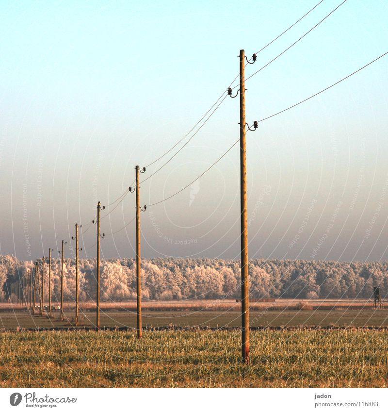 Holzsoldaten Feld Baum Wiese Raureif Stromtransport Hochspannungsleitung Hochsitz Brandenburg Ordnung kalt Winter Eis Unendlichkeit gefroren Elektrizität Kraft