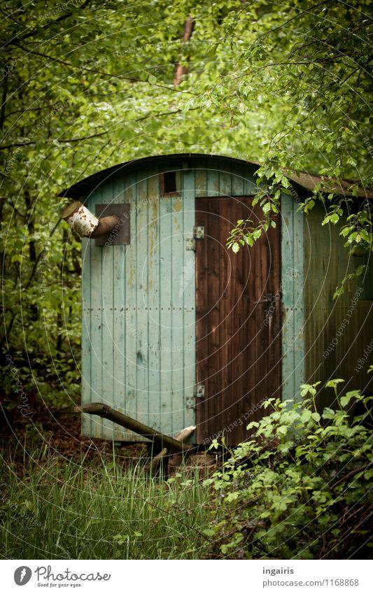 Wer da wohl wohnt... Natur alt blau grün Einsamkeit Landschaft ruhig Haus Wald Holz außergewöhnlich Stimmung braun wild Idylle Tür