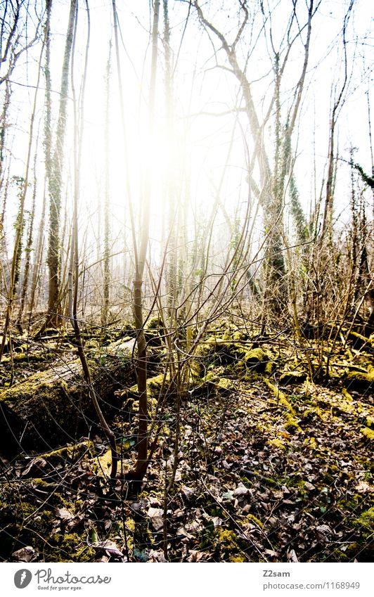 Back to the woods Umwelt Natur Landschaft Sonnenfinsternis Sonnenlicht Sommer Schönes Wetter Pflanze Baum Sträucher Wald frisch nachhaltig natürlich grün