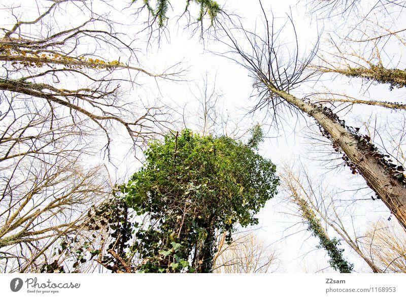 Up in the sky Natur alt grün Baum Landschaft ruhig Ferne Wald Umwelt Frühling natürlich Gesundheit Erde frisch Wachstum