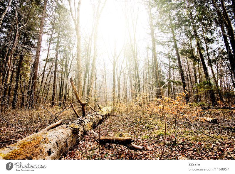 Woid Umwelt Natur Landschaft Sonne Sonnenlicht Herbst Schönes Wetter Baum Sträucher Wald frisch nachhaltig natürlich gelb grün Einsamkeit Energie Erholung
