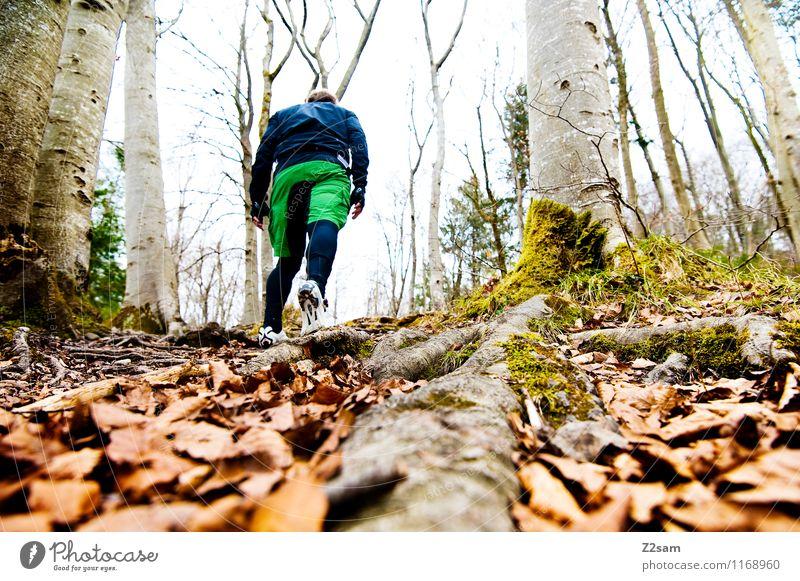 Aufstieg 2300 Natur Mann Baum Landschaft Blatt Wald Erwachsene Umwelt Herbst Sport gehen Lifestyle Freizeit & Hobby Kraft wandern Perspektive