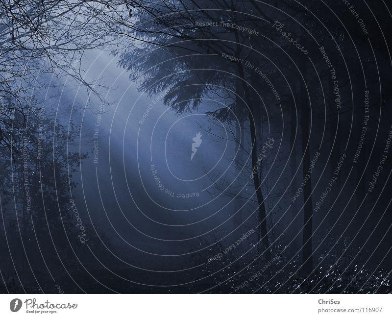 Waldlicht blau Baum Winter Blatt Wald dunkel Landschaft Herbst kalt grau Beleuchtung Nebel Beginn Romantik geheimnisvoll Tunnel
