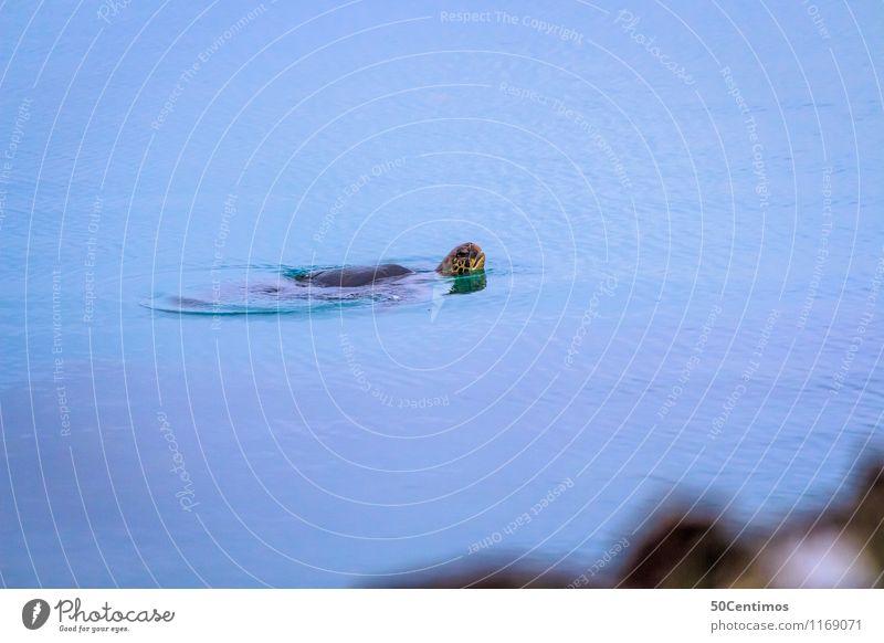 Die Schildkröte Meer Tier Wildtier Wasserschildkröte Schwimmen & Baden Blick Ecuador Galapagosinseln Wasseroberfläche Farbfoto Gedeckte Farben Außenaufnahme