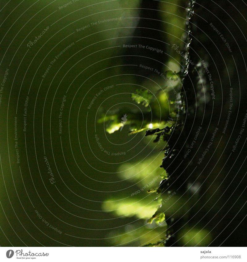 moos... Natur Wasser grün Baum Pflanze Umwelt dunkel Wassertropfen Urwald feucht Moos Lichtspiel Baumrinde Borneo