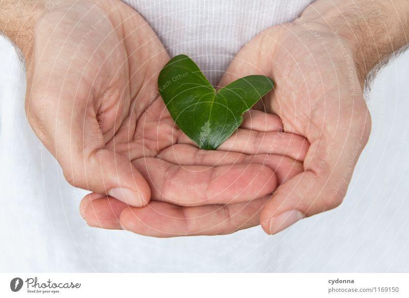 Fürs Herzblatt schön Gesundheit Wellness Leben Wohlgefühl Erholung Valentinstag Mensch Junger Mann Jugendliche Hand 18-30 Jahre Erwachsene Natur Frühling Blatt