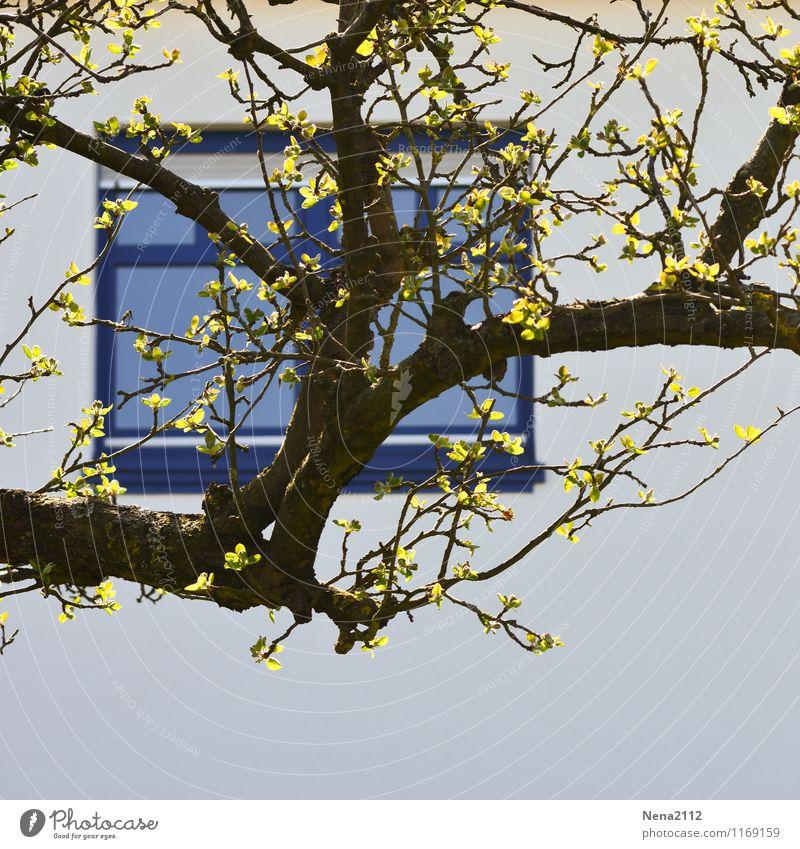 Vue sur cour Frühling Baum Blatt Garten Park Dorf Kleinstadt Stadt Haus Einfamilienhaus Mauer Wand Fassade Fenster Frühlingsgefühle Ast blau Hof