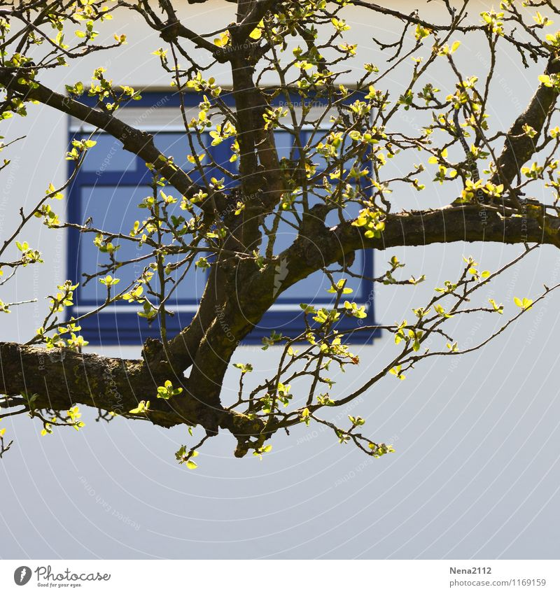 Vue sur cour Stadt blau Baum Blatt Haus Fenster Wand Frühling Mauer Garten Fassade Park Häusliches Leben Ast Dorf Kleinstadt