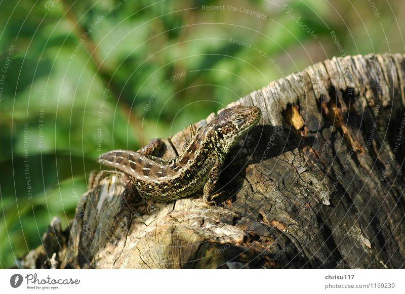 Sonnenbad Natur Sommer Freude Tier Zufriedenheit Wildtier beobachten Abenteuer entdecken Erfahrung