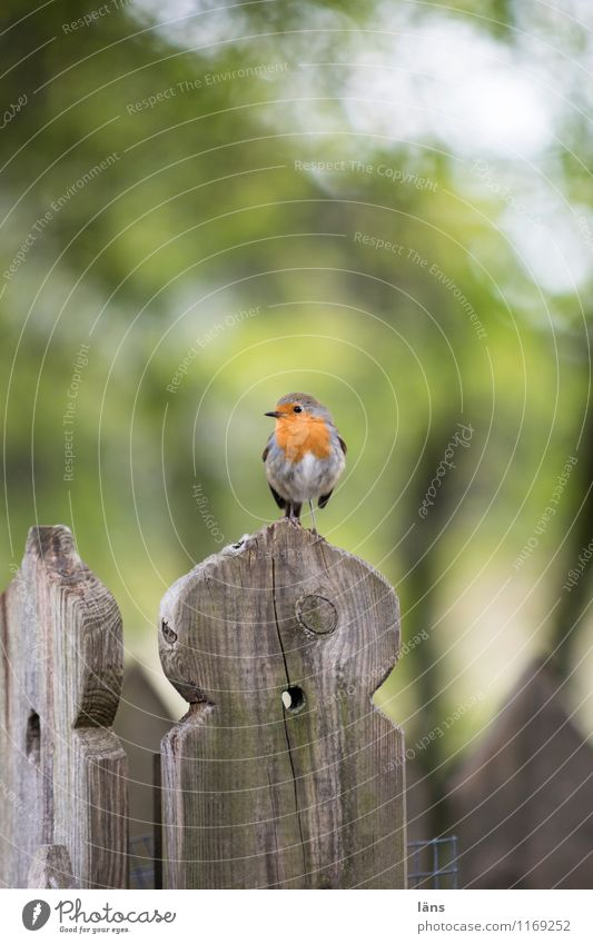 ausschau Natur Vogel sitzen Aussicht Rotkehlchen