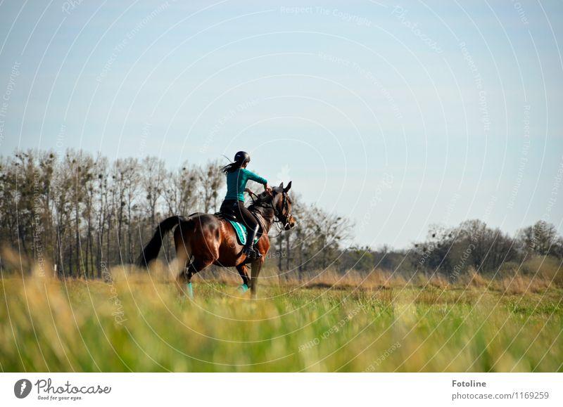 Auf gehts!!! Mensch feminin Junge Frau Jugendliche Erwachsene 1 Umwelt Natur Landschaft Pflanze Tier Schönes Wetter Baum Gras Wiese Nutztier Pferd frei hell
