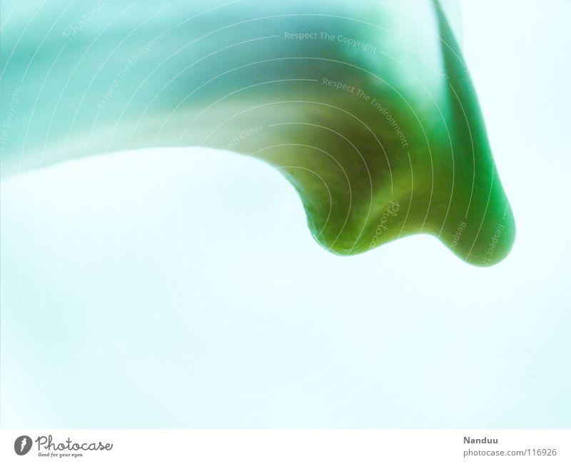 modernes Wohndesign weiß hell-blau grün abstrakt Hintergrundbild geschwungen außergewöhnlich seltsam Makroaufnahme Blüte Blume Orchidee obskur Bogen Nahaufnahme