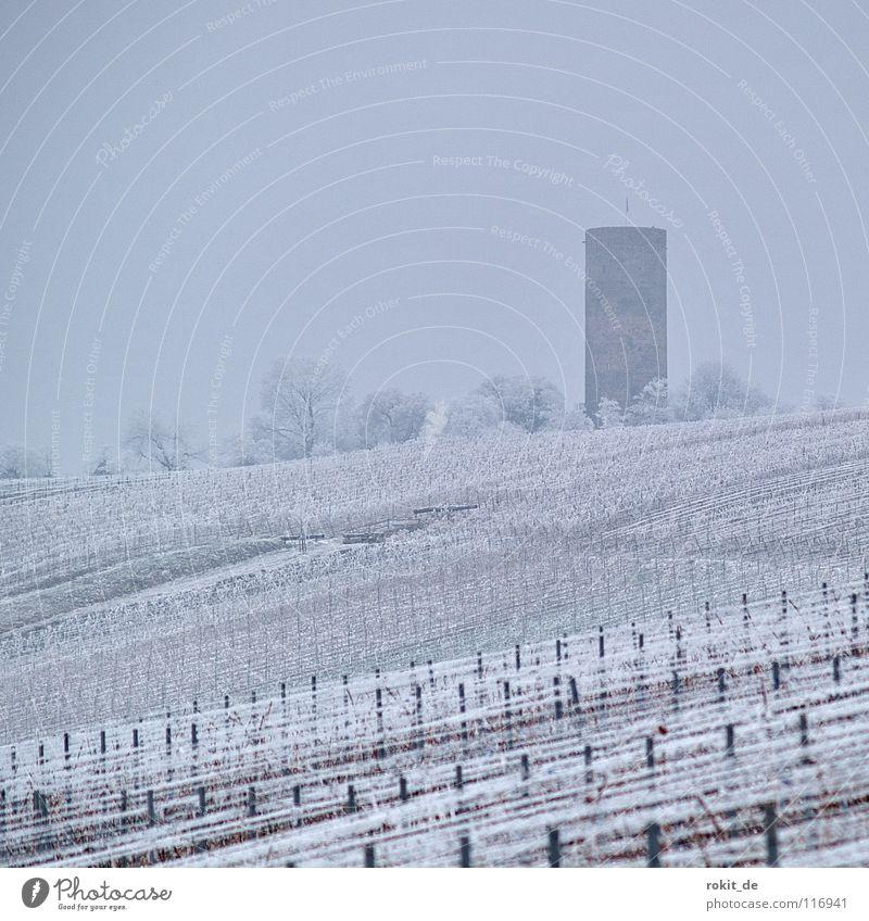 Eisweinberg Weinberg Ruine Zeile Draht Kiedrich Rheingau kalt gefroren Raureif Nebel trist grau Eiskristall anziehen Winter Baum Puderzucker Weinbau verfallen