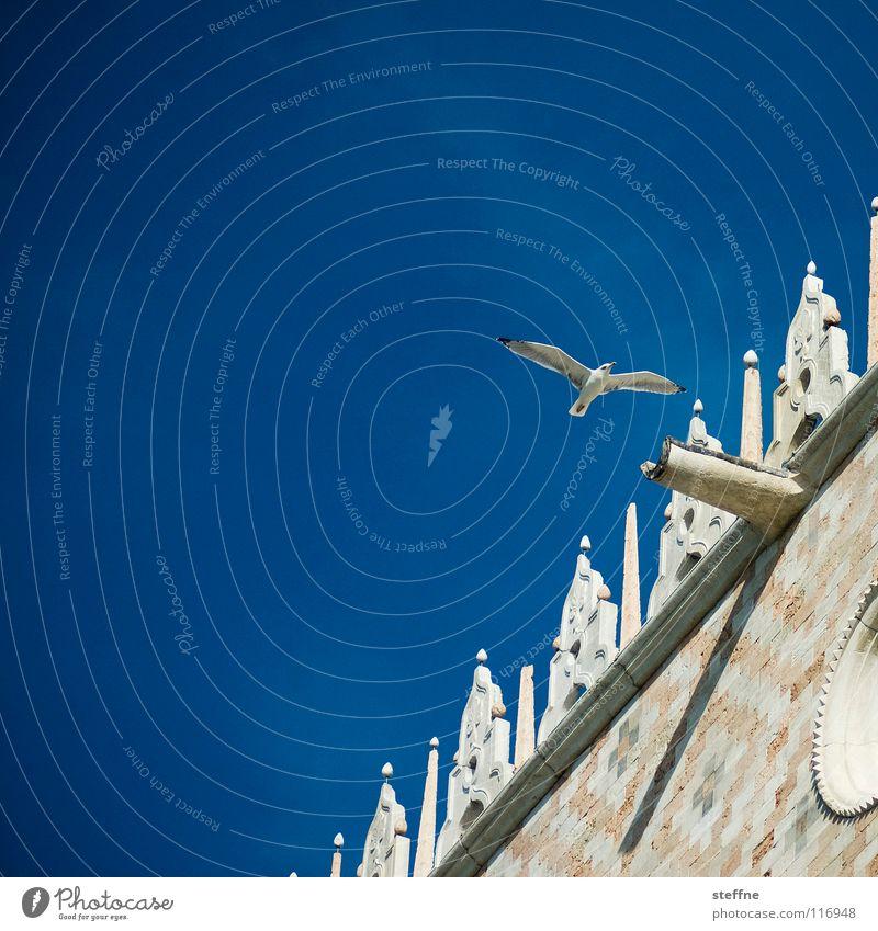 Möwe II: Die Pirsch Himmel weiß Meer blau Sommer schwarz Einsamkeit Luft Vogel Küste Luftverkehr gefährlich Feder Flügel Italien entdecken