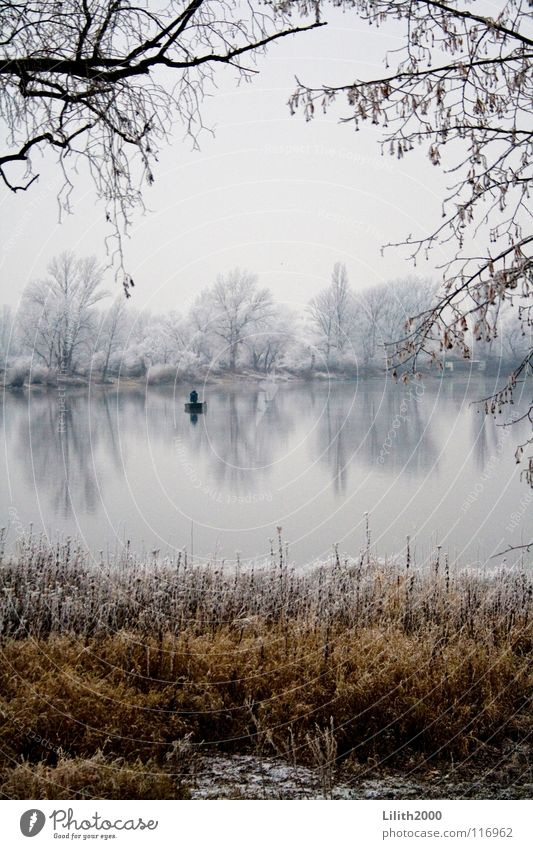 Allein auf dem See Wasser Himmel weiß Baum Winter kalt Schnee Gras Eis Wasserfahrzeug braun Küste Frost Klarheit Ast