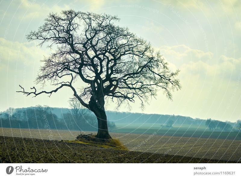 """Feldbaum Baumrinde Buchsbaum Ast verzweigt """"""""crown of tree"""""""" träumen Biotop Botanik Forstwirtschaft Pflanze geblümt field Landschaft Szene Ackerbau Natur stem"""