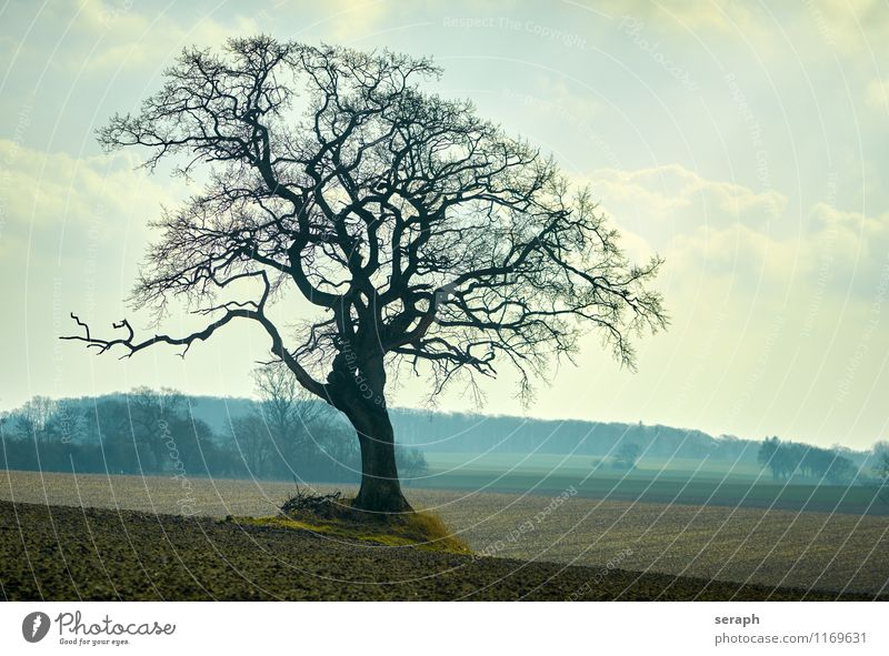 Feldbaum Natur Pflanze Baum Landschaft Winter Wald Umwelt Deutschland träumen Wachstum Ast Jahreszeiten Baumstamm Zweig Baumkrone Ackerbau