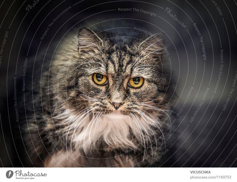 Der Blick des Katers Katze Natur Tier dunkel Auge sprechen Stimmung Lifestyle Design Häusliches Leben groß weich Haustier Tiergesicht Fragen böse