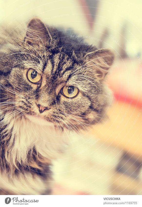 Interessierte Katze zu Hause Katze Natur Tier Auge lustig Stil Spielen Hintergrundbild Wohnung Design weich retro Neugier Ohr Fell Haustier